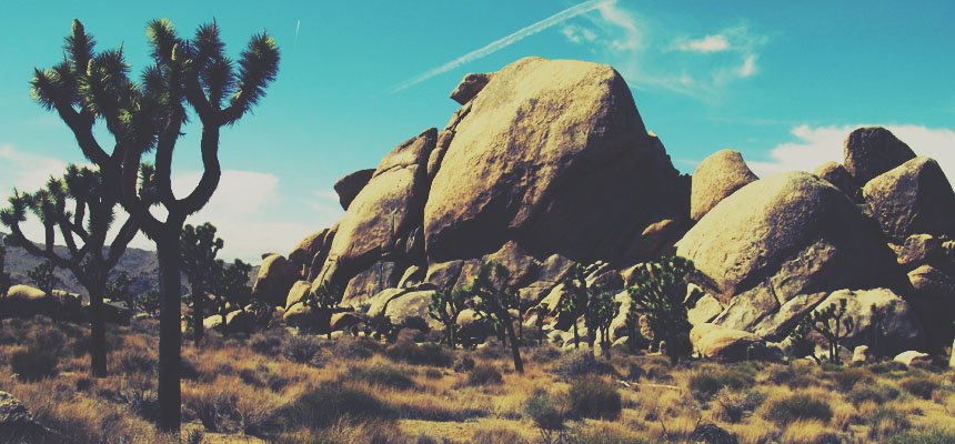 joshua-tree-header
